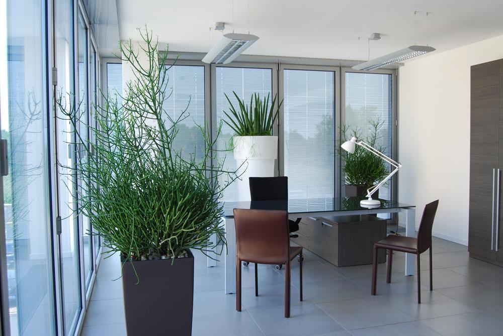 arredare-ufficio-piante