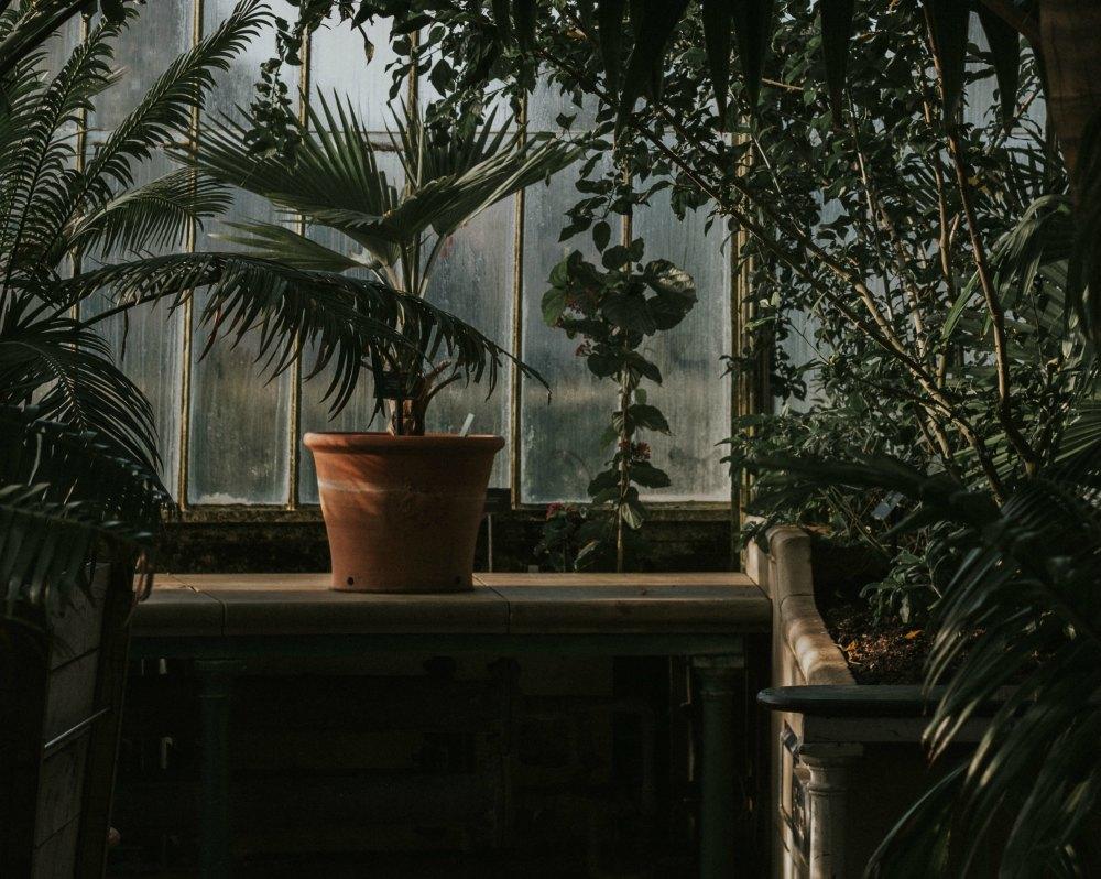 Giardino interno come crearsi un 39 oasi dentro casa - Giardino interno ...