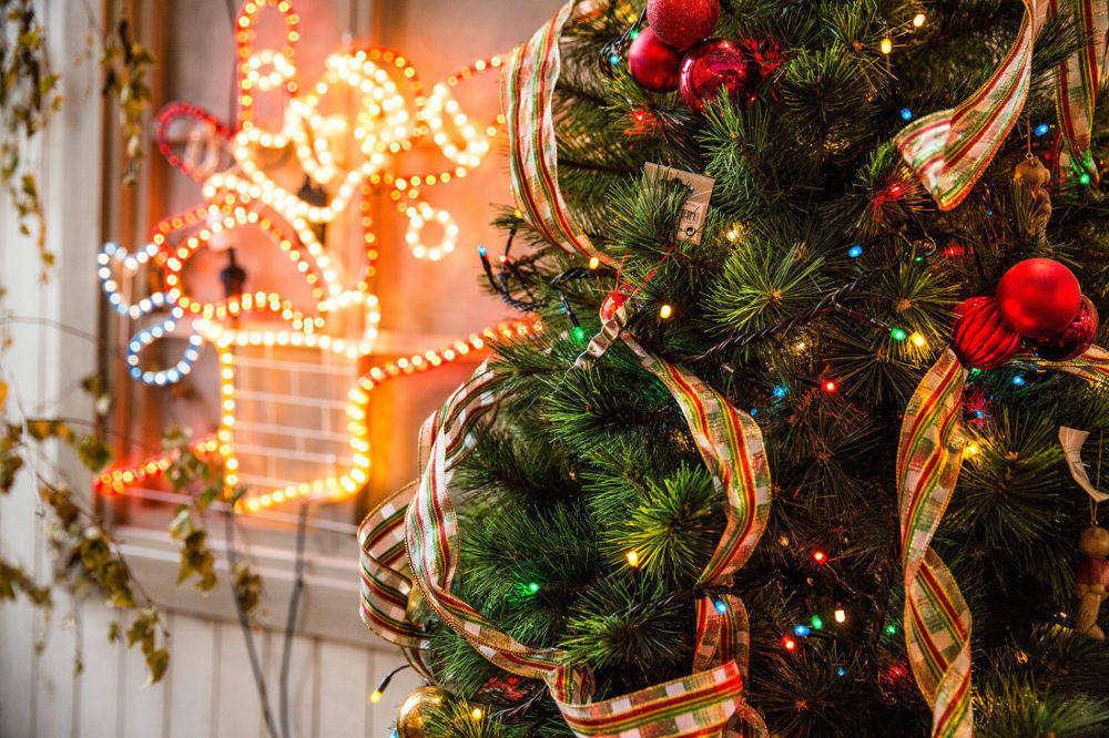 Alberi di Natale veri per arredare casa