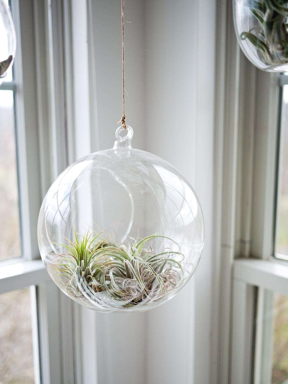 Come arredare casa con piante e fiori